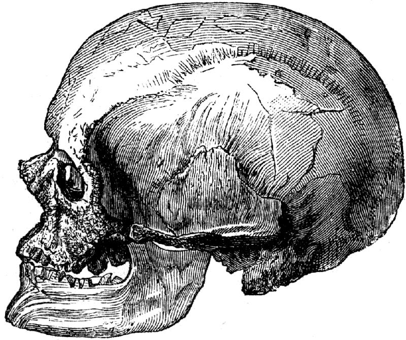 クロマニョン人の頭骨