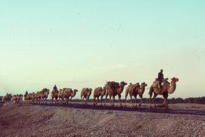 シルクロードを歩くラクダ
